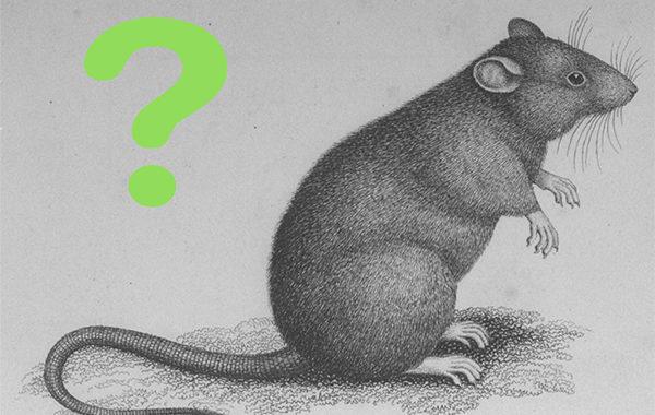 Ambilur Control de Plagas Noticias Ratas Ratones