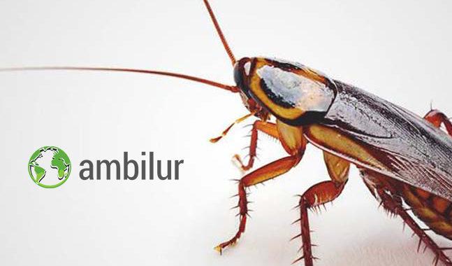 Ambilur_Control de Plagas_Cucarachas